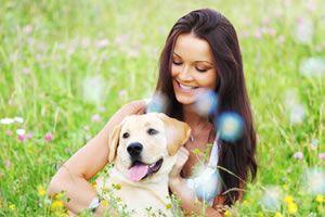"""Quando se pergunta, quem é o melhor amigo do homem? Logo se responde: """"o cachorro"""".  Pois é, analisando energeticamente o cachorro, chegamos à seguinte conclusão:  O cachorro busca sempre em um ambiente os locais de maior concentração de energia positiva. Inclusive, na Radiestesia, dizem que a melhor"""