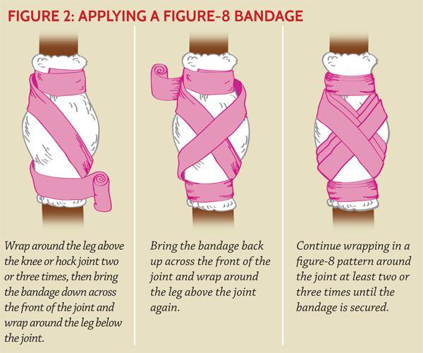 Applying a hock bandage.