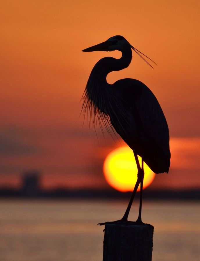 Heron and the Setting Sun by Michael Fitzsimmons, via 500px