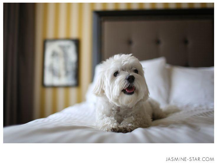 Jasmine Star's doggie Polo :)