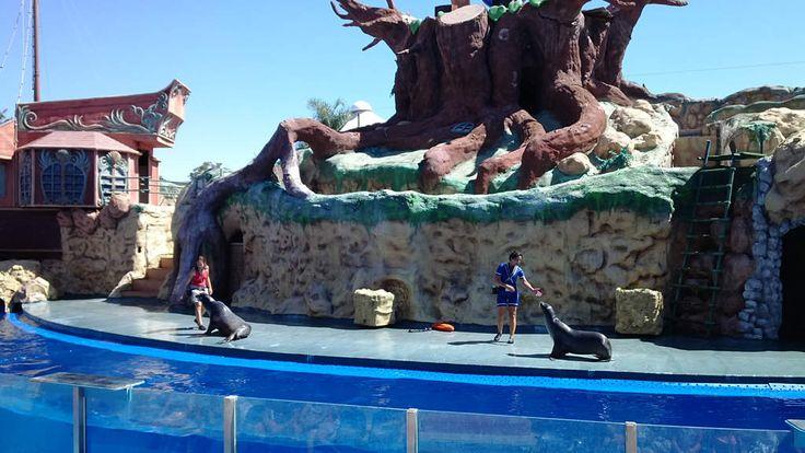Zoomarine in Albufeira is pretpark, waterpark, dierenpark in één. Info: 5 grote shows (o.a. dolfijnenshow), zelf zwemmen met dolfijnen, video.