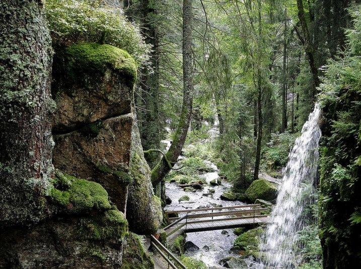 The Black Forest, Germany