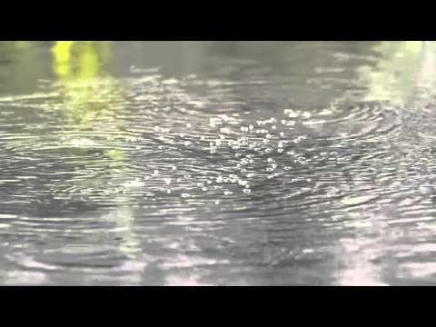 Whirligig beetles at the natural swimming lake