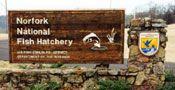 Norfork National Fish Hatchery, Norfork, Arkansas
