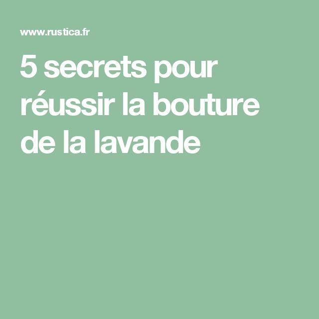 5 secrets pour réussir la bouture de la lavande