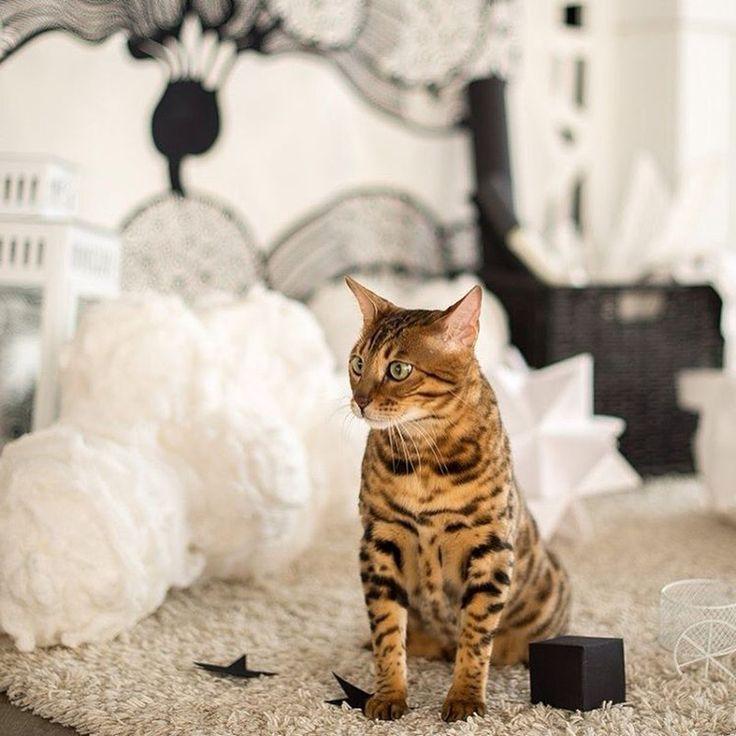 позитивного утра, друзья! @_onemore_love_ #decorideas #decor #designdecor #designinterior #cat #котики #котэ #котвинтерьере #galleria_arben