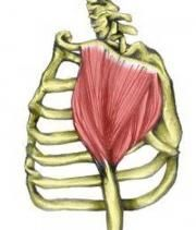 "How to treat a Deltoid Muscle Strain? ""An injured deltoid muscle can cause pain at the front, side or back of the shoulder."""