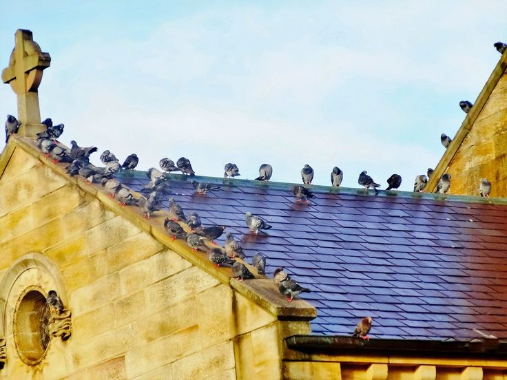 Happy birds - Was thon king who get more benefit from this church. Birds or people