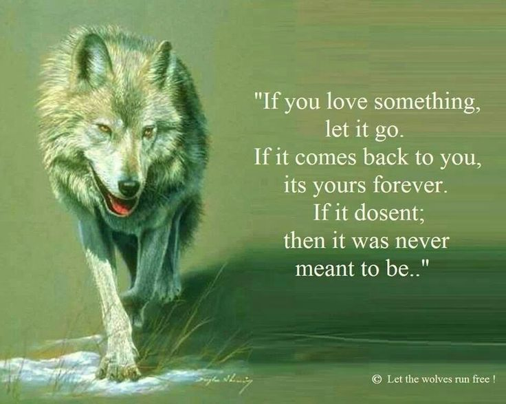 147 best images about wolf quotes on pinterest. Black Bedroom Furniture Sets. Home Design Ideas