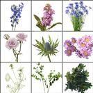 Order flowers online bloomsbythebox