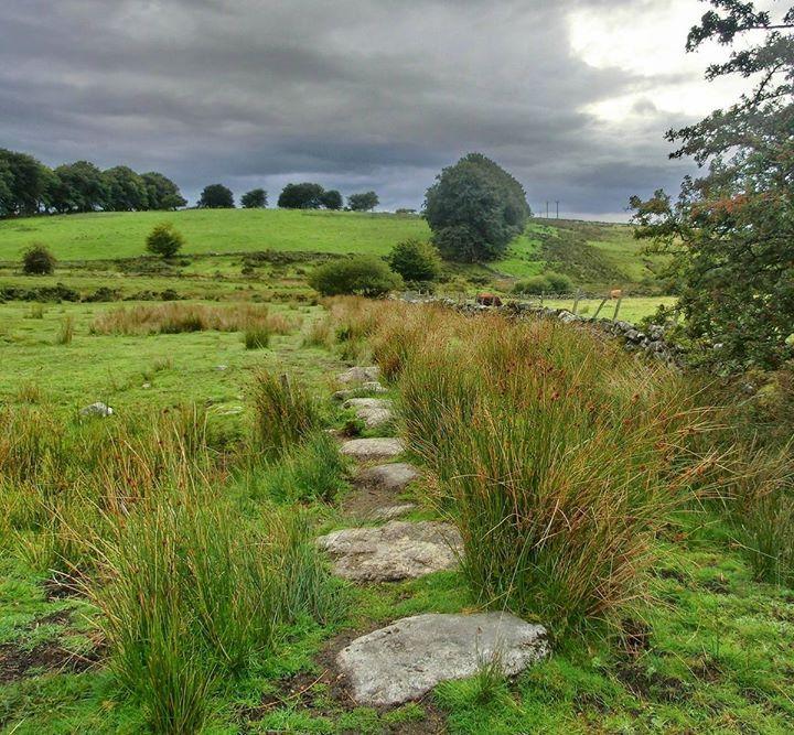 Dartmoor, Devon.