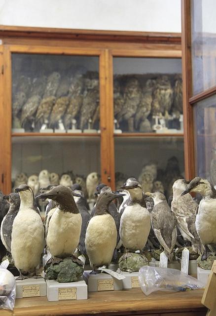 "Backroom,""La Specola"" (Museo di Storia Naturale), Florence, Italy"