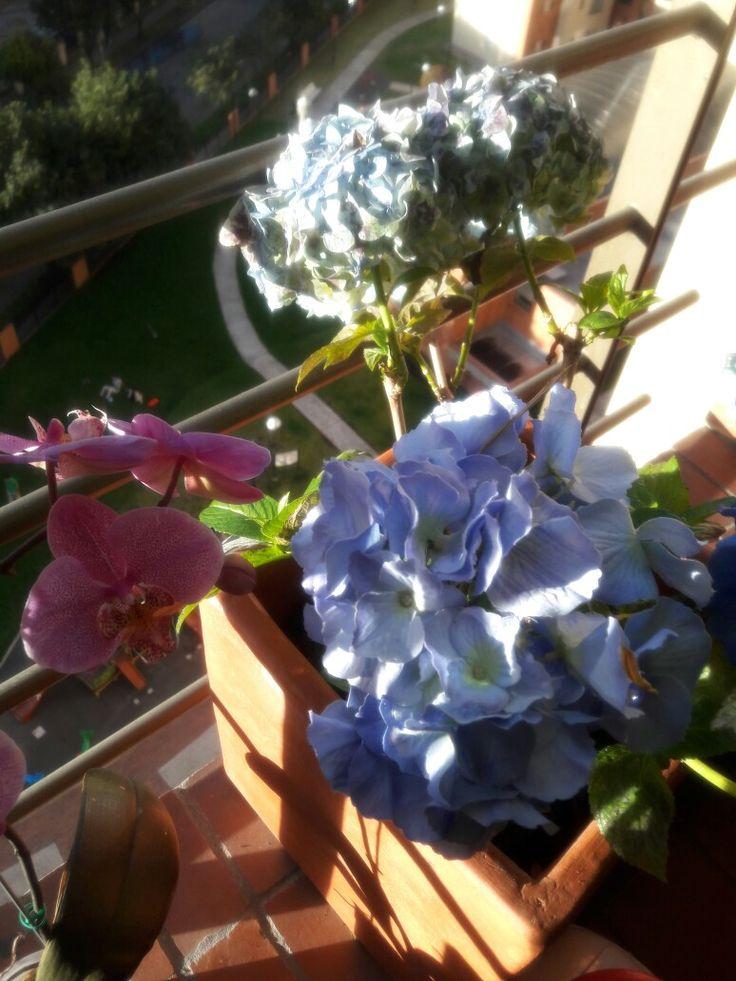 Orquídea y Hortensia, flores