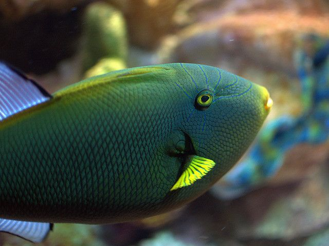 1000 images about colorful fishes on pinterest colorful for Teal fishing pole