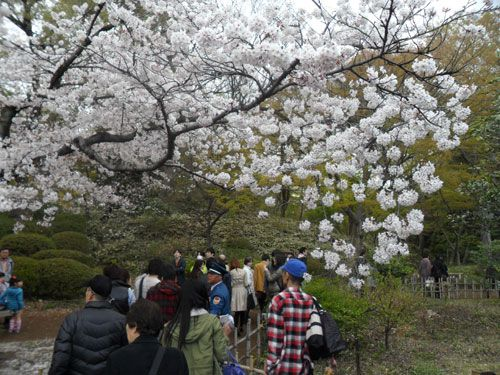 Cherry Blossoms Asian Hookup Already A Member Toggle Catch