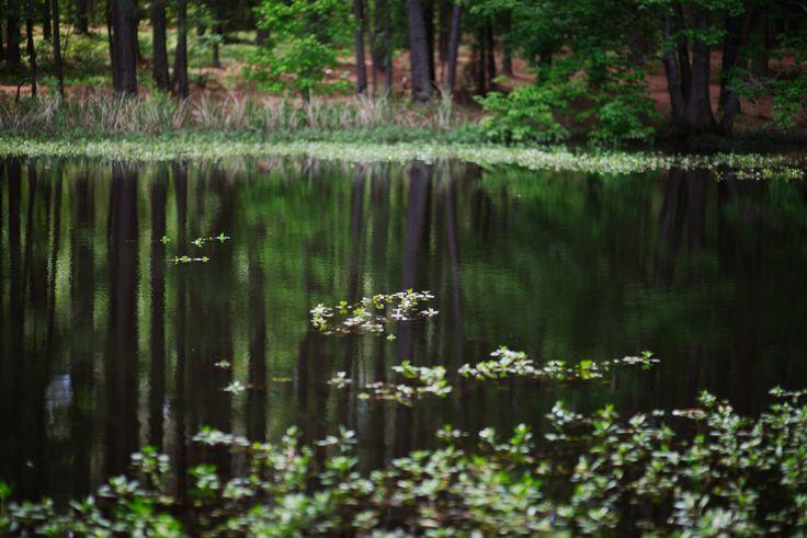 https://flic.kr/p/UYM5nC   walk about Harris Lake 34