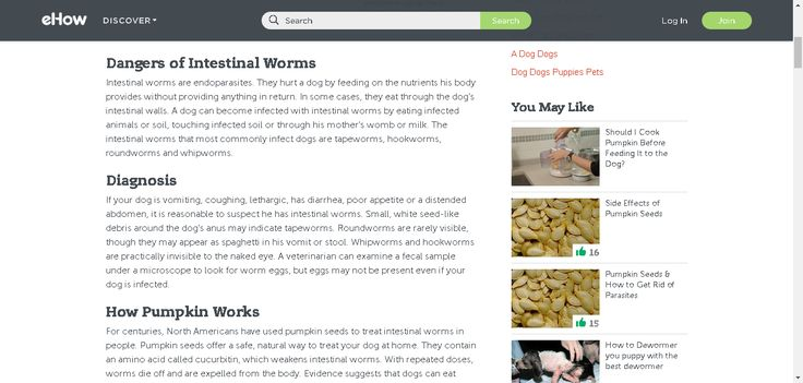 How do tapeworms obtain food without a digestive system