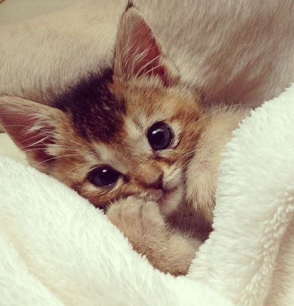 Ahhhhhhhh. | 19 Cats Looking So Cozy That It Will Finally Bring You Peace