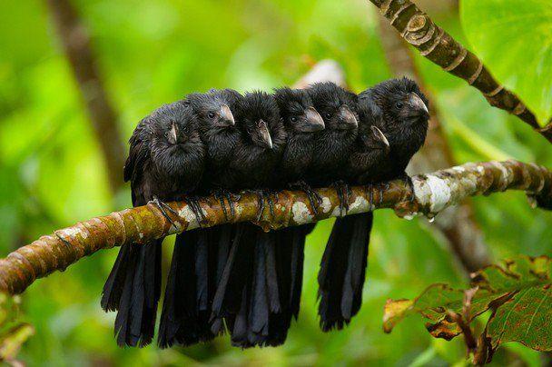 crow chicks ❤❦♪♫