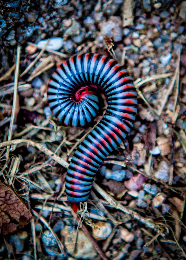 The Tralfamadorians see Human beings as Millipedes will have old people place at the bottom and baby's Legs at one end.