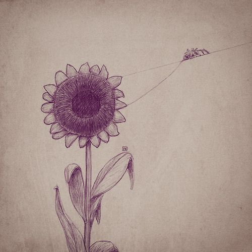 Sunflower on web