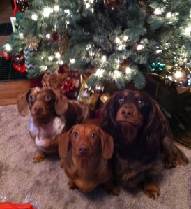 Follow the link to read the Furever Dachshund Rescue blog and check out more cute Christmas photos submitted by our fans