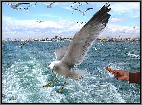 Doğanın huzur dolu güzelliğinde İstanbul'a yakın bir kaçamak http://www.buyukadaotel.com.tr/ #büyükada #büyükadaotel #büyükadaotelleri