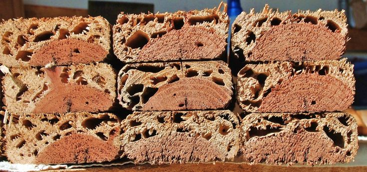 Redwood lumber with termite damage [1024×479]