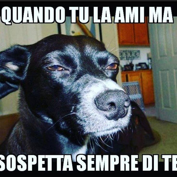 """""""Mi piace"""": 84, commenti: 5 - MOLLA L'OSSO (@molla_losso_catania) su Instagram: """"When you love her but she suspects you. 🤣😂🤣😂🤣😂🤣😂😅😂🤣😅😂🤣😅😆 ➖➖➖➖➖➖➖➖➖➖➖➖➖➖➖➖➖➖➖➖➖➖🕵️♂️🕵️♀️ follow me…"""""""