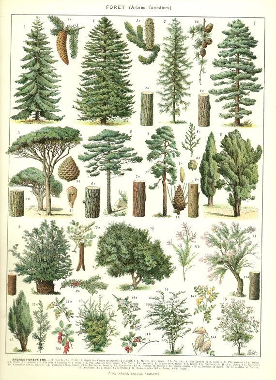 1936 Illustration botanique vintage Images par FrenchVintagePrints