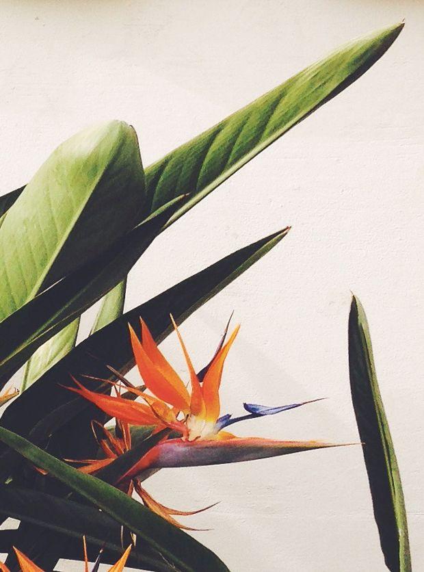 best 25 oiseau du paradis ideas on pinterest oiseau de paradis rapaces and les oiseaux sauvages. Black Bedroom Furniture Sets. Home Design Ideas