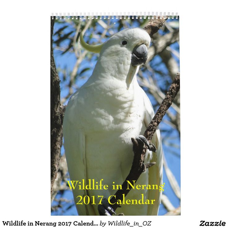 Sulphur Crested Cockatoo 2017 Calendar - Australian Wildlife. Click on photo to view item then click on item to see how to purchase that item.  #wildlife #cockatoo #sulphurcrestedcockatoo #calendar #zazzle