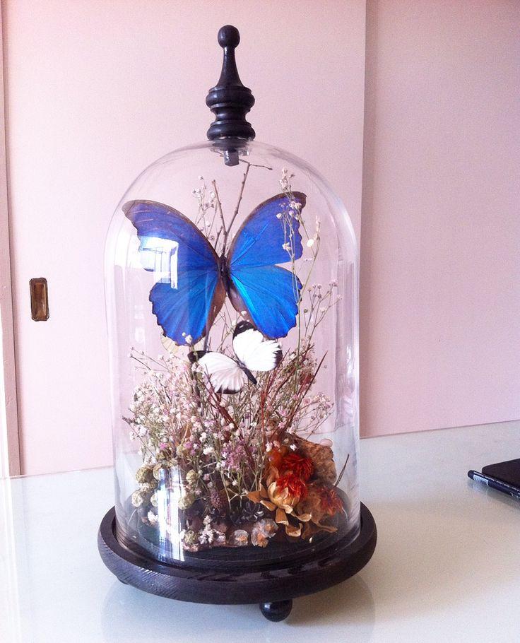 fanal con mariposa, diseño Cristian Pizarro