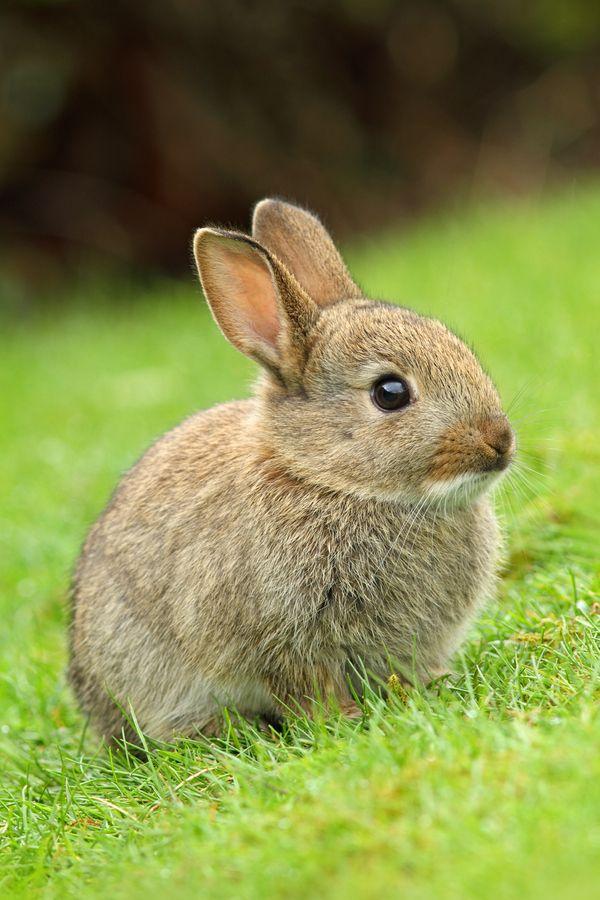 картинки маленькие заяц секцию помещают
