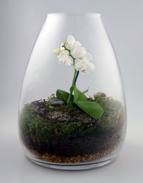 Low Light Orchids for terrarium | Orchid Terrarium