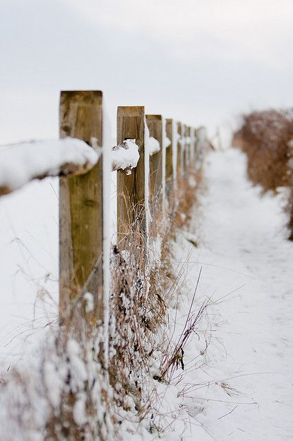 Love this perspective of a snowy fence.