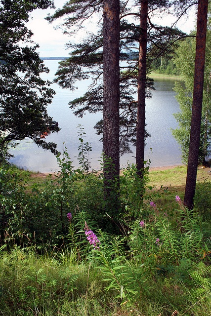 Finland - the home of Nautor's Swan