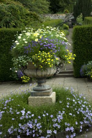 OMG I love this urn overflowing with sprightly little blooms! It's so lush, with more of it around the base - wonder if these grow in heat and humidity...