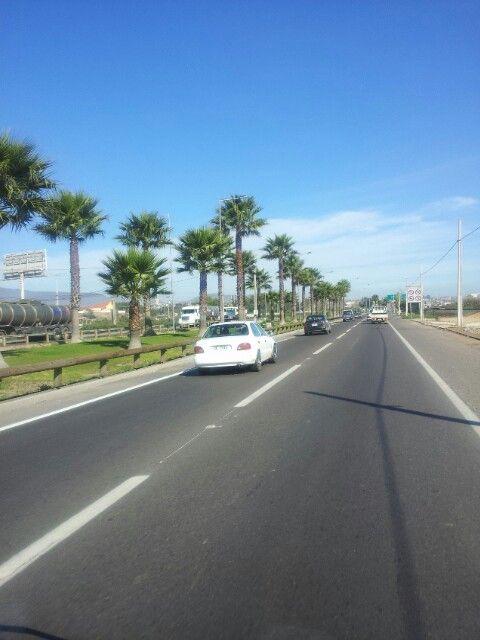 Chile coquimbo