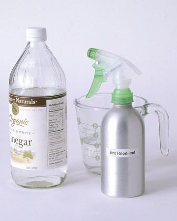 Keep Out the Ants. Mix equal parts Vinegar and water in a spray bottle.