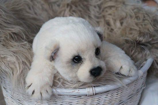 Polar white bear By Tsybina Natali - Bear Pile