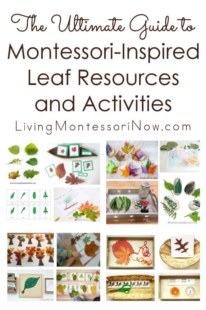 A huge roundup of Montessori-inspired leaf printables, activities, and  products for a