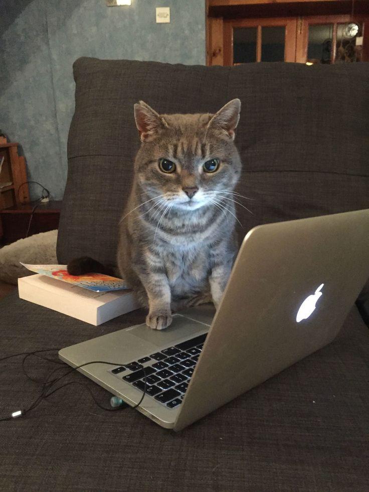 фото парней картинки в интернете кошки называют