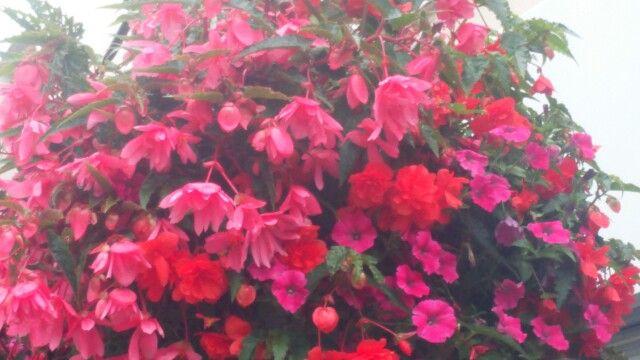 Flower basket, Bridgwater town centre