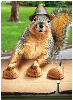 43 best greeting cards images on pinterest funny animals funny squirrel plays shell game 200040 avanti greeting card made in usa animal jokesfunny m4hsunfo