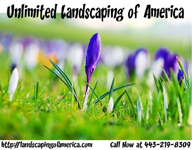 Certified Landscaping Contractor in Baltimore
