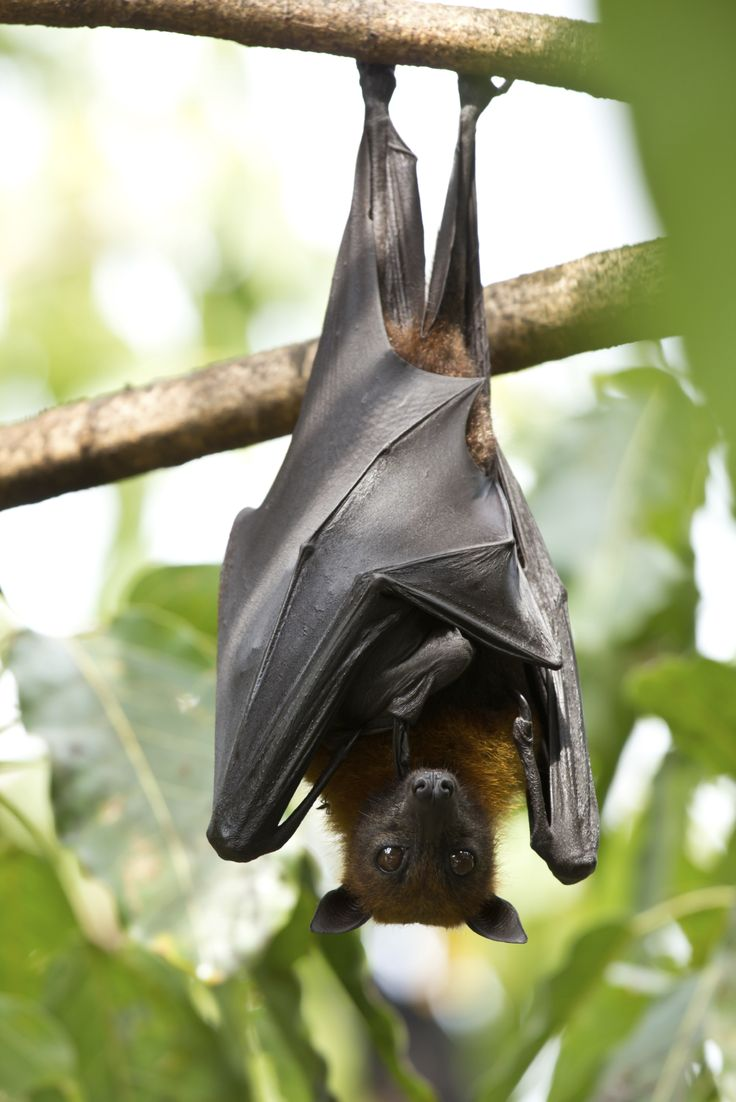 How To Use Bat Guano As A Fertilizer --- BAT GUANO TEA  http://www.gardeningknowhow.com/composting/manures/bat-guano-fertilizer.htm