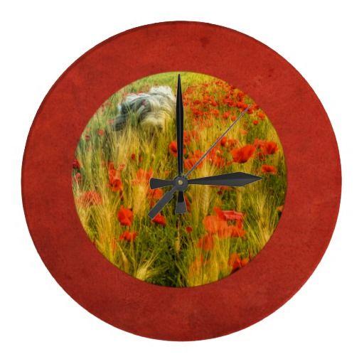 Clock Bearded collie Niki running in red poppy field.