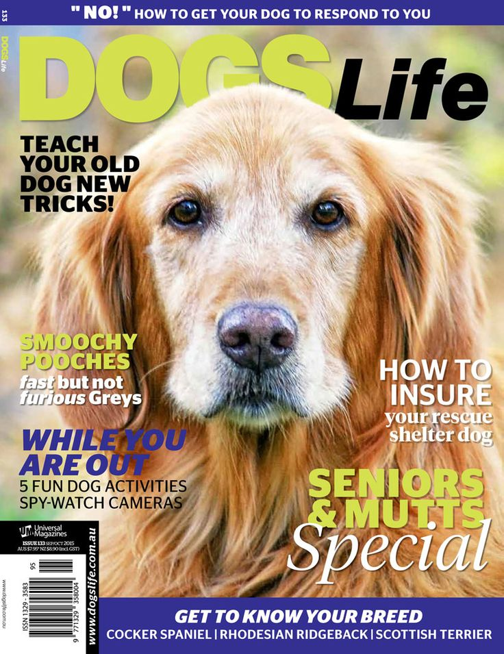 Our latest issue has hit the stands! Don't forget to grab your copy dog-lovers. :) http://www.universalshop.com.au/  #dogslifemag