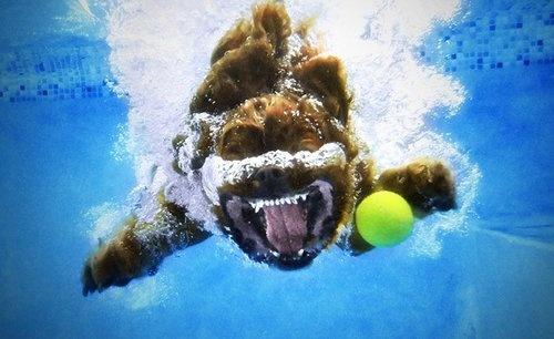 chien sous l'eau